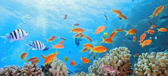 ocean of tropical fish and coral